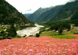 Rural Himachal Tour