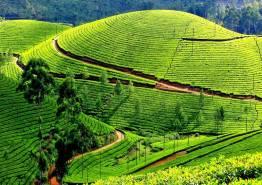 Short of Kerala